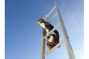 12 bí quyết sử dụng thang nhôm bền lâu, tránh hư hỏng